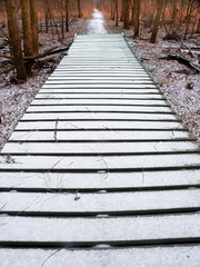 Fototapete - Midwest Forest Preserve Winter Trail