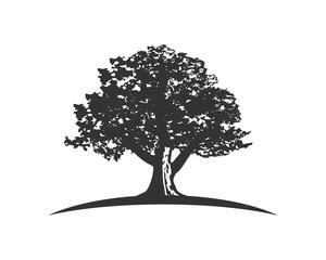 oak capital finance