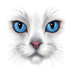 hand-drawing portrait of white cat