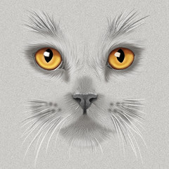 hand-drawing portrait of a a gray British cat