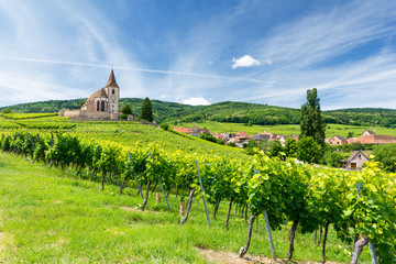 old church and vineyards in Hunawihr village in Alsace, France Fototapete