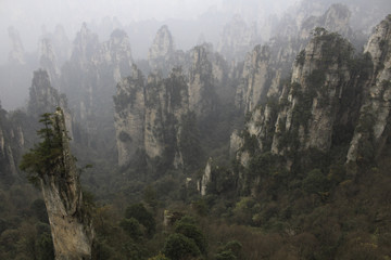 A Valley in Zhangjiajie National Park With The Tall LImestone Mountains Famous In the Misty Cloudy Morning. Trees Cling to the Majestic Mountains. Taken in Sichuan, China