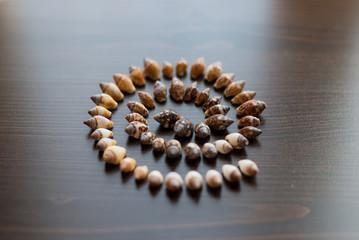 Seashell cone swirl on wood