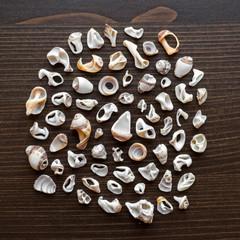 Dead broken seashells form a circle