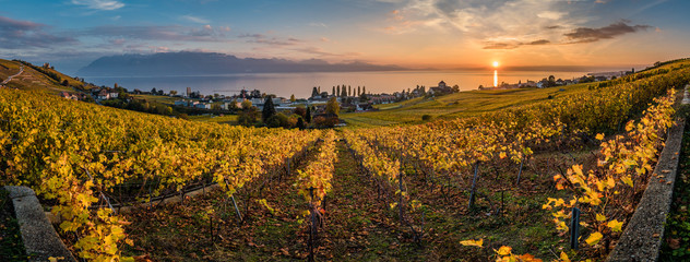 Garden Poster Vineyard Panorama of vineyards in Switzerland