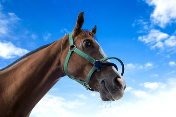 head of horse with rope in racing sport game