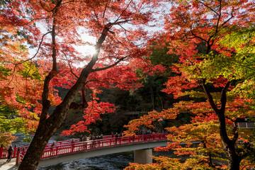 Wall Mural - 紅葉の美しい香嵐渓