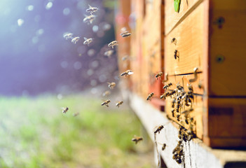 Bees flying around beehive. Beekeeping concept.