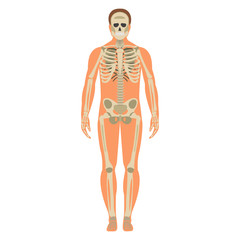 Skeleton wuth Body icon. Human Skeleton front side Silhouette. Isolated on White Background. Vector illustration