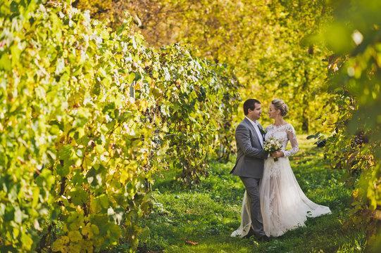 A beautiful young couple walks among the vineyards 378.