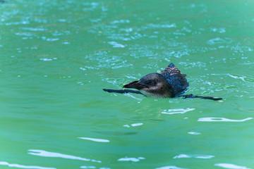 Pinguin - Badevergnügen