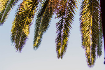 Palm Tree View From Below