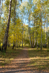 a path between trees in an autumn forest