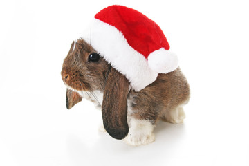 Christmas rabbit. Celebrate holiday with Christmas bunny. Rabbit waering Santa Claus hat. Isolated white studio background. Christmas pet lop.