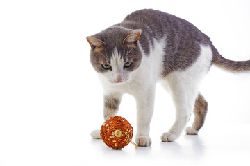 Cat with christmas tree. Domestic cat wants to play with christmas tree bauble Cat playing with christmas tree xmas ornaments bauble ball. White background.