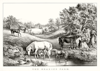 Horses grazing and drinking in farmland. Ancient bucolic context and wonderful landscape. Old illustration by unidentified author, publ. in New York, 1867
