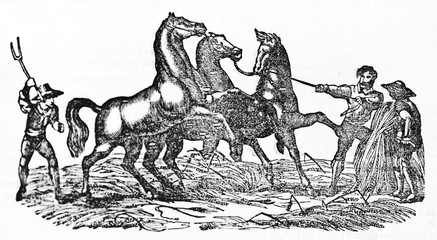 Ancient farmers taming horses for the threshing wheat. Old Illustration by unidentified author published on Magasin Pittoresque Paris 1834