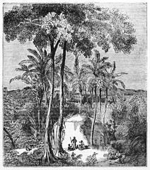 Ancient botanical illustration of Antiaris (Antiaris toxicaria) also known as Upas tree Java Indonesia, big tree surrounded by nature. Unidentified author published on Magasin Pittoresque Paris 1834