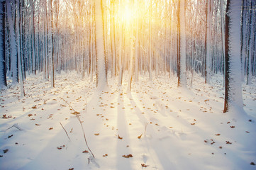 Zimowy las pokryty śniegiem