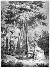Fraxinus incision and manna harvesting by two medieval people. Old Illustration by unidentified author published on Magasin Pittoresque Paris 1834