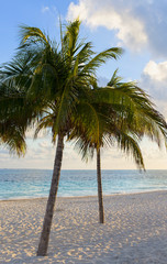 Coconut trees on the white sand beach during sunrise. Caribbean ocean in the background. Vacation concept image, vertical wallpaper.