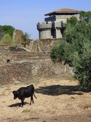 Ganaderia de Toros bravos  en Caceres, Extremadura