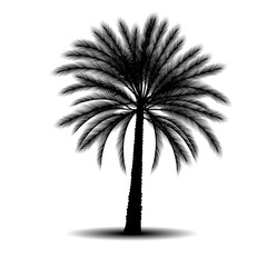 silhouette a palm tree with shadow