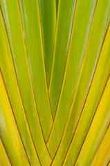 Close up to Green palm tree texture background