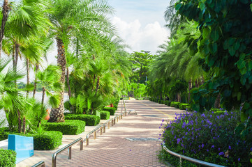 Cityscape of public park with green coconut palm trees and walk way