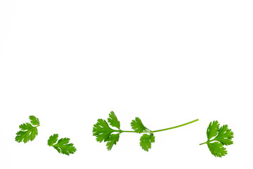 coriander leaves and stalks arranged on white background with copy space