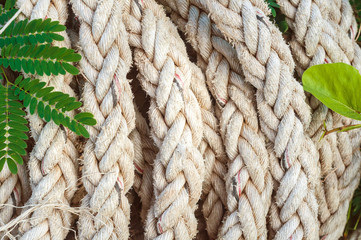 Marine Rope background with green leaves