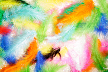 collection pen feathers birds isolated background