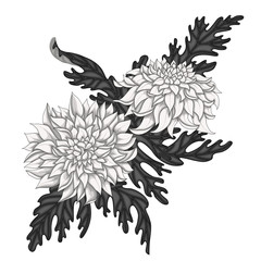 Chrysanthemum flowers with leaves on a white isolated background. Monochrome floral composition.