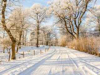 Frosty oak tree on a snowy country road