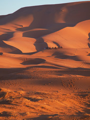 The camel tour in the Sahara dunes in Merzouga, Africa