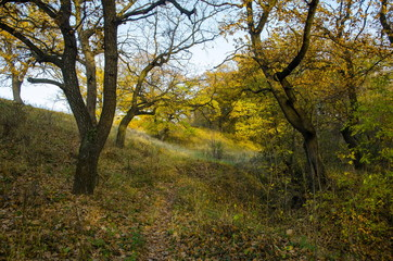 The path, strewn with leaves, passes through the autumn oak grove.