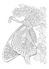 Hand drawn butterfly and flower. Sketch for anti-stress adult coloring book in zen-tangle style. Vector illustration for coloring page.
