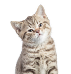 Satisfied cat portrait isolated