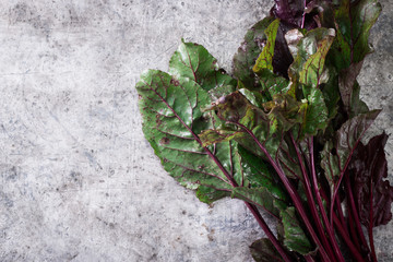 Pile of homegrown organic young beets with green leaves holding in the hand .Fresh harvested beetroots on grey concrete background.