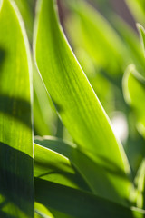 Abstract image on plant theme
