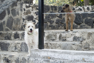 Perros observando
