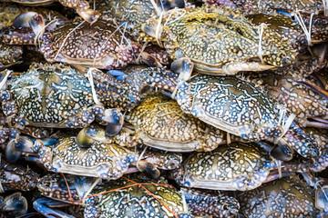 Fresh crabs in fishery market