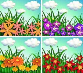Four scenes of flower fields