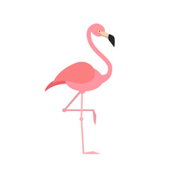 Pink flamingo isolated on white background. Bird. Vector stock.
