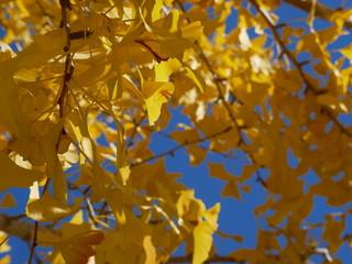 feuilles d'automne saison