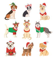 Christmas Dogs collection. Vector illustration of funny cartoon different breeds dogs in Christmas costumes. Isolated on white