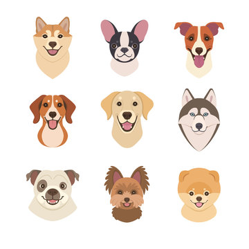 Dogs faces collection. Vector illustration of funny cartoon different breeds dogs in trendy flat style. Isolated on white.