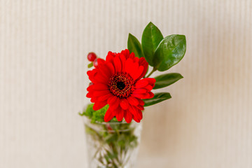 bouquet of red gerbera flowers and a green twig on a light background