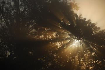 Sun is shining through canopy