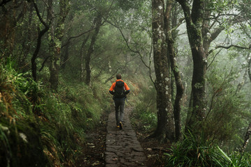 Adult male wandering on a path through the deep rain forest of Madeira, Portugal
